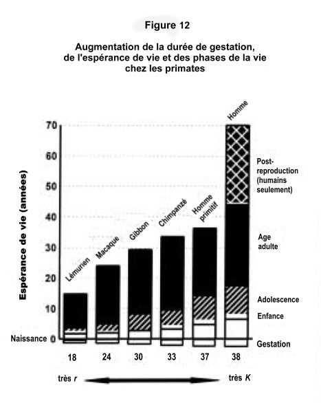 durée de vie gestation