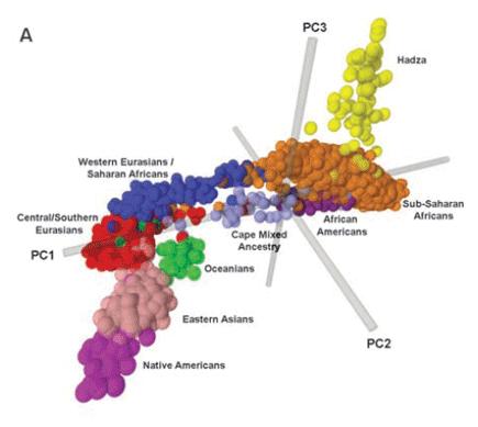 genetic cluster