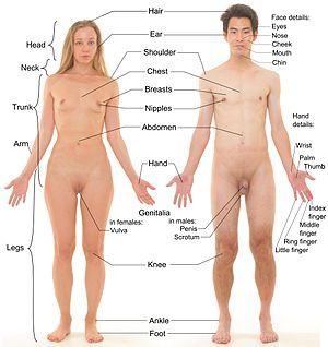 sexe biologie