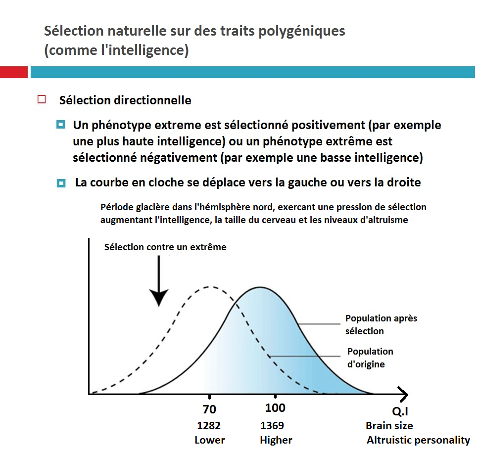 Natural Selection for polygenic traits IQ cold climates