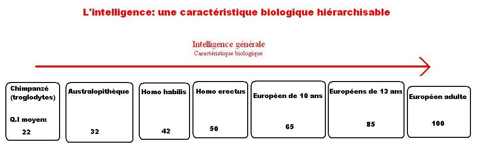 Qu'est-ce que l'intelligence ?, QI et Intelligence Humaine
