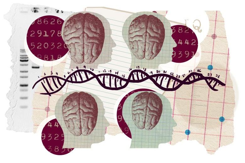 Il y aurait à peu près 10.000 gènes de l'intelligence…